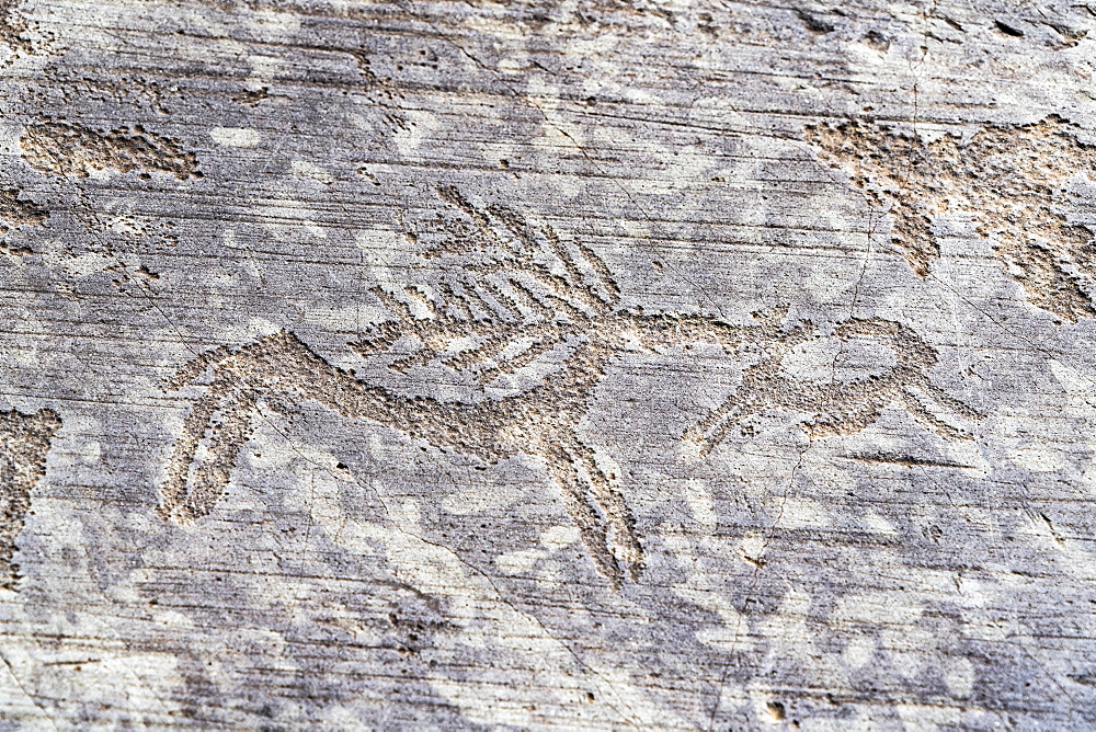 Detail of deer, rock engraving, Naquane National Park, Capo di Ponte, Valcamonica, Brescia province, Lombardy, Italy