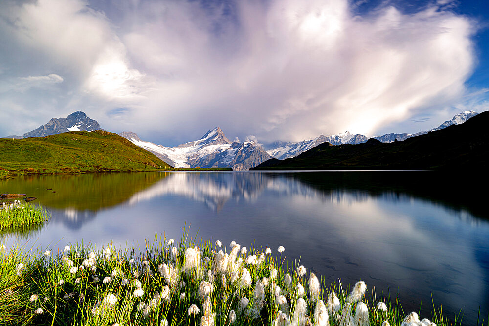 Cotton grass in bloom surrounding Bachalpsee lake and mountains, Grindelwald, Bernese Oberland, Bern Canton, Switzerland - 1179-5018