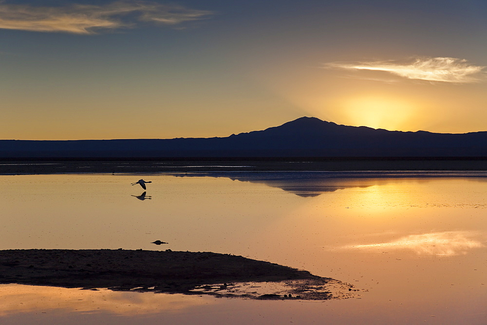 A solitary flamingo flying above the still waters of a lagoon with a volcano of the Andes in the background, Chile, South America