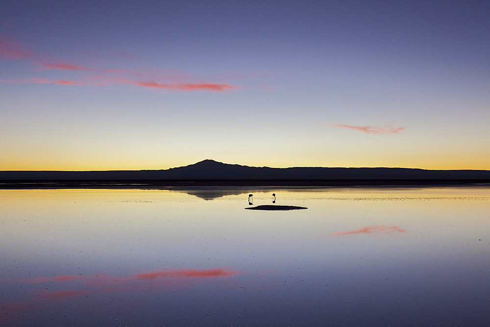 A couple of flamingos fishing in the still waters of a lagoon with a volcano of the Andes in the background, Chile, South America