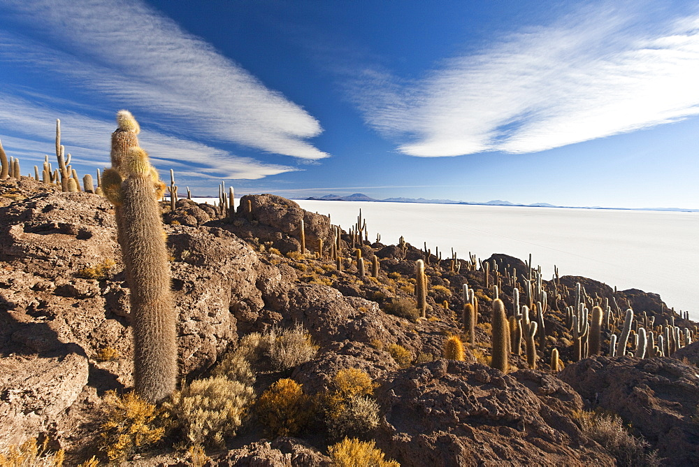 The Salar de Uyuni, a desert salt flat, seen from the Isla del Sol, covered in cactus and bushes, Sur Lipez Region, Bolivia, South America