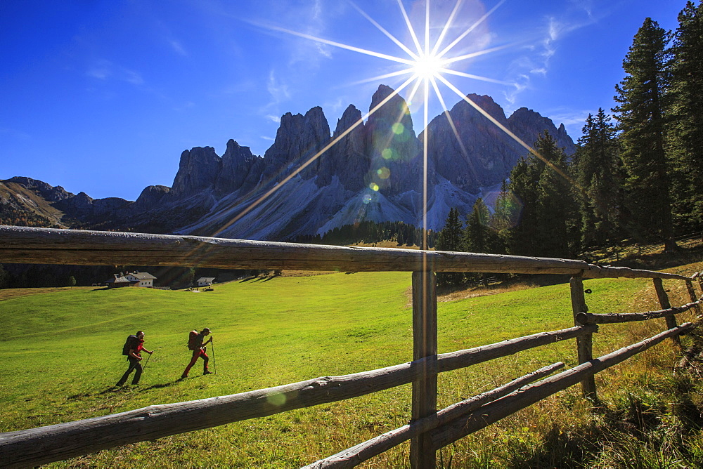Hikers proceed from Glatsch Alm with Odle in background, Funes Valley, South Tyrol, Dolomites, Trentino-Alto Adige, Italy, Europe
