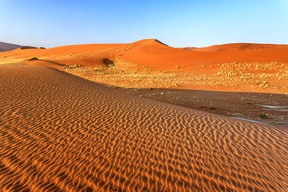 Dried plants among the sand dunes shaped by wind, Deadvlei, Sossusvlei, Namib Desert, Namib Naukluft National Park, Namibia, Africa
