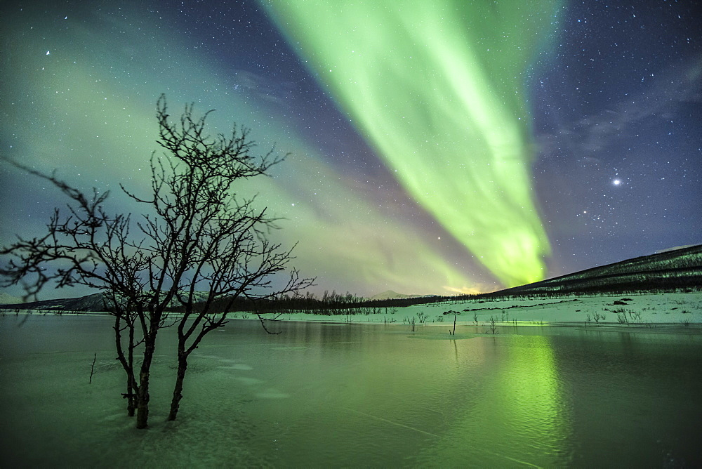 Aurora Borealis on the frozen lagoon of Jaegervatnet, Stortind, Lyngen Alps, Troms, Lapland, Norway, Scandinavia, Europe