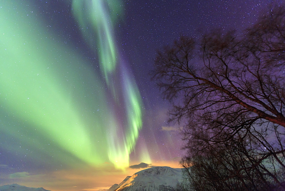 Northern Lights on the icy landscape of Svensby, Lyngen Alps, Troms, Lapland, Norway, Scandinavia, Europe