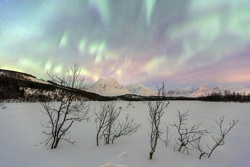 The Northern Lights illuminates the snowy landscape in Svensby, Lyngen Alps, Troms, Lapland, Norway, Scandinavia, Europe