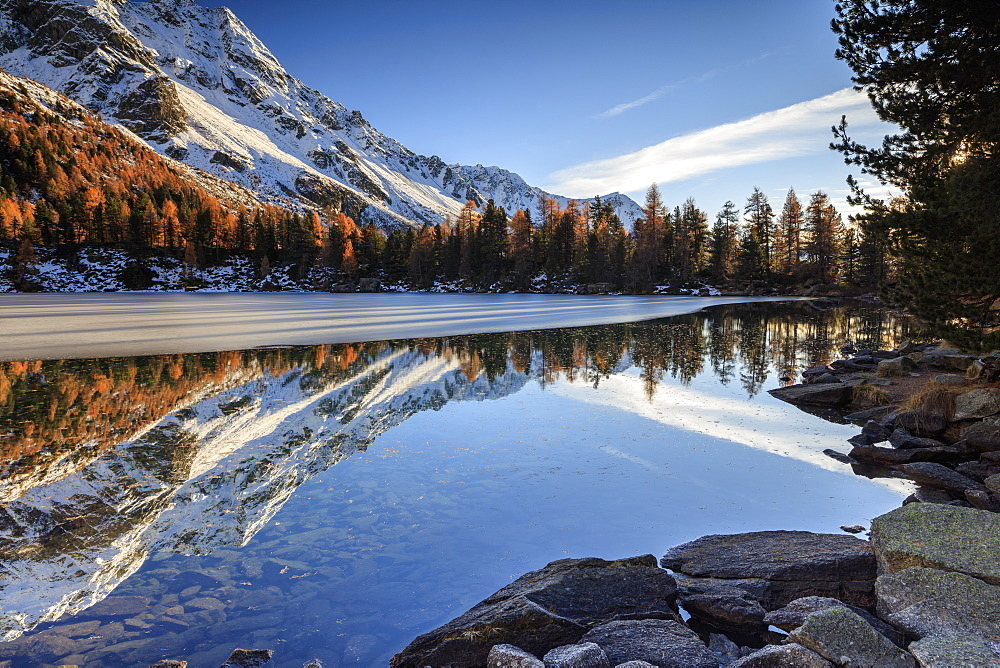 Colourful woods are reflected in Saoseo Lake still partially frozen, Poschiavo Valley, Canton of Graubuenden, Switzerland, Europe