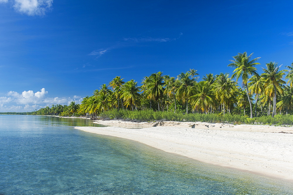Beautiful palm fringed white sand beach in the turquoise waters of Tikehau, Tuamotus, French Polynesia, Pacific