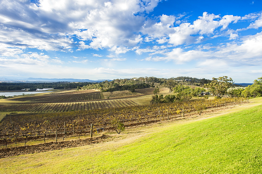 View over the wine region of the Hunter Valley, New South Wales, Australia, Pacific