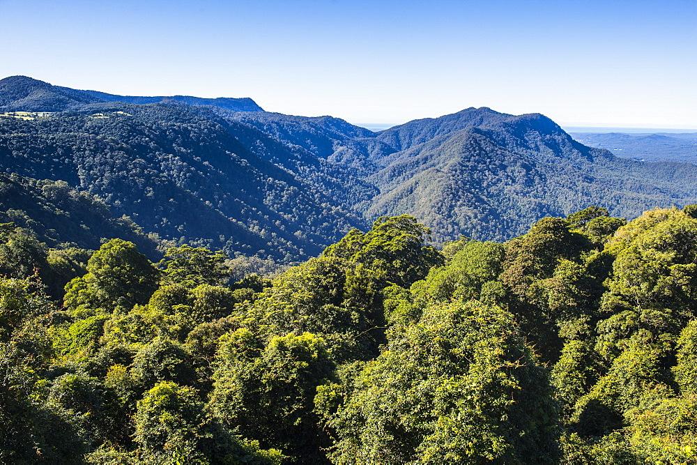 Unesco world heritage sight Dorrigo National Park, New South Wales, Australia