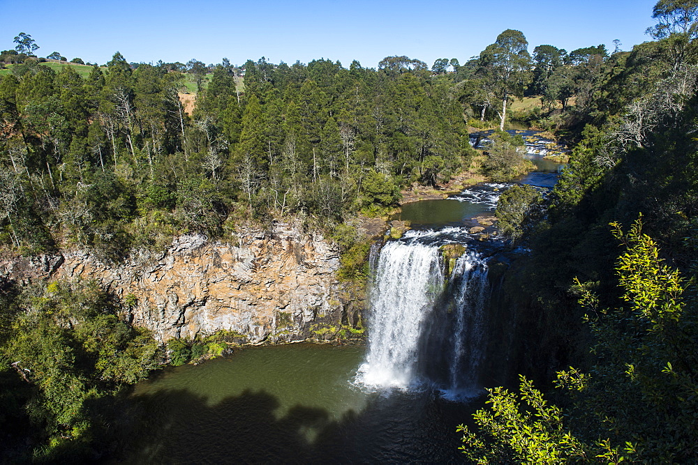 Dangar Falls, UNESCO World Heritage Site, Dorrigo National Park, New South Wales, Australia, Pacific