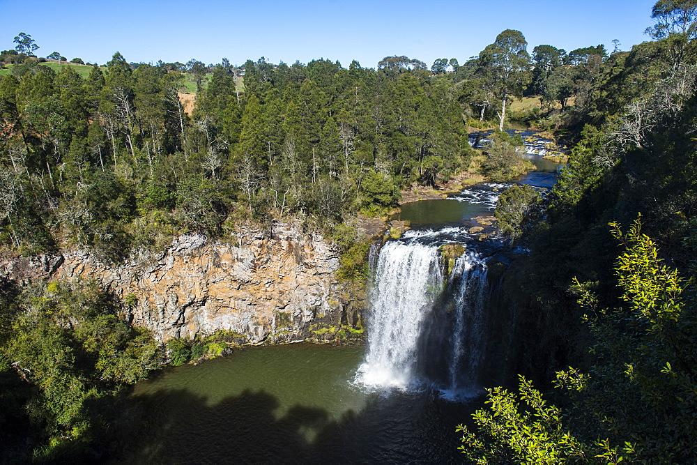 Dangar Falls, Unesco world heritage sight Dorrigo National Park, New South Wales, Australia