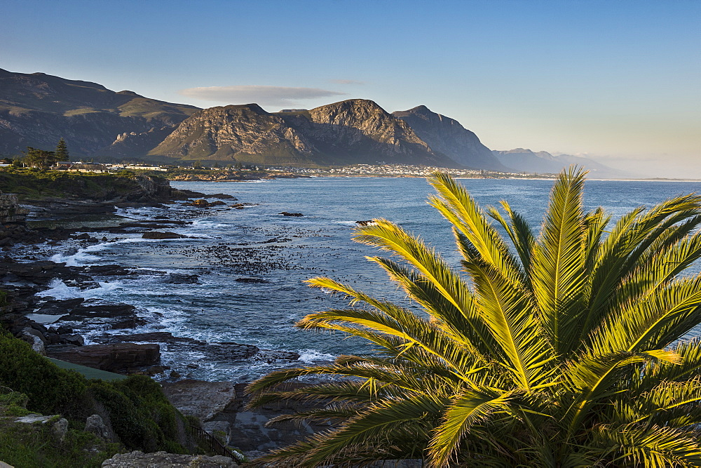 Hermanus bay at sunset, Western cape, South Africa