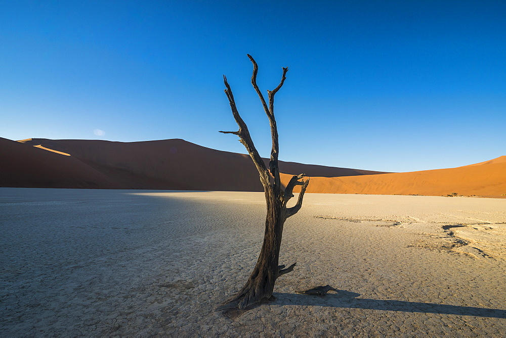 Deadvlei, an old dry lake in the Namib desert, Namibia