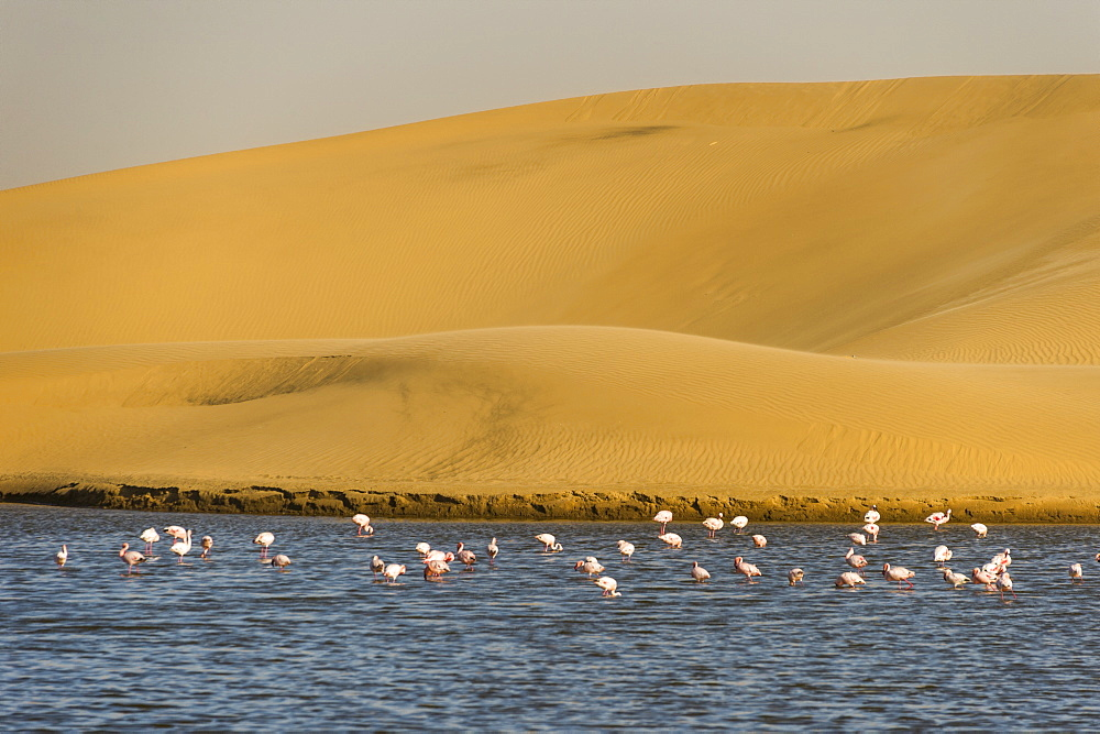 Saltwater pool with flamingos near Walvis Bay, Namibia, Africa