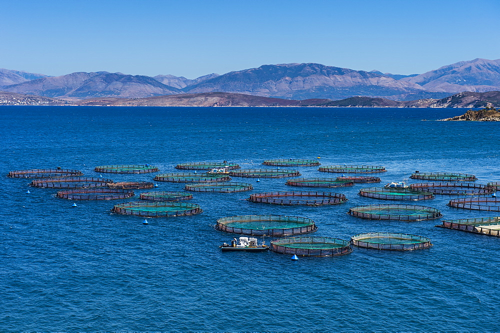 Fish farm in Kassiopi, Corfu, Ionian islands, Greek Islands, Greece, Europe