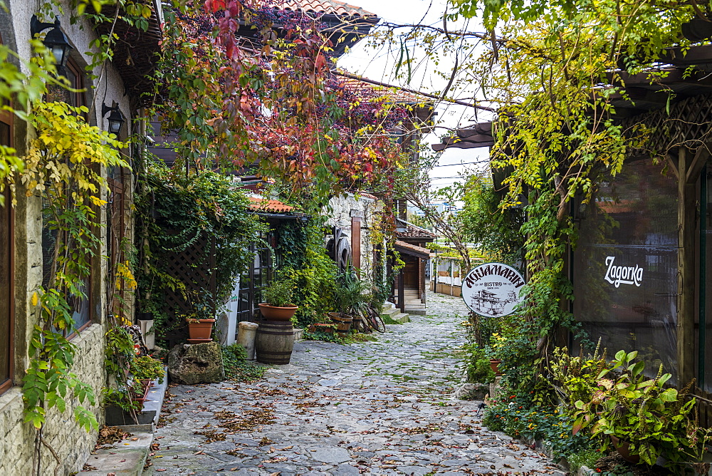 Autumn leaves in the Unesco world heritage sight Nesebar, Bulgaria