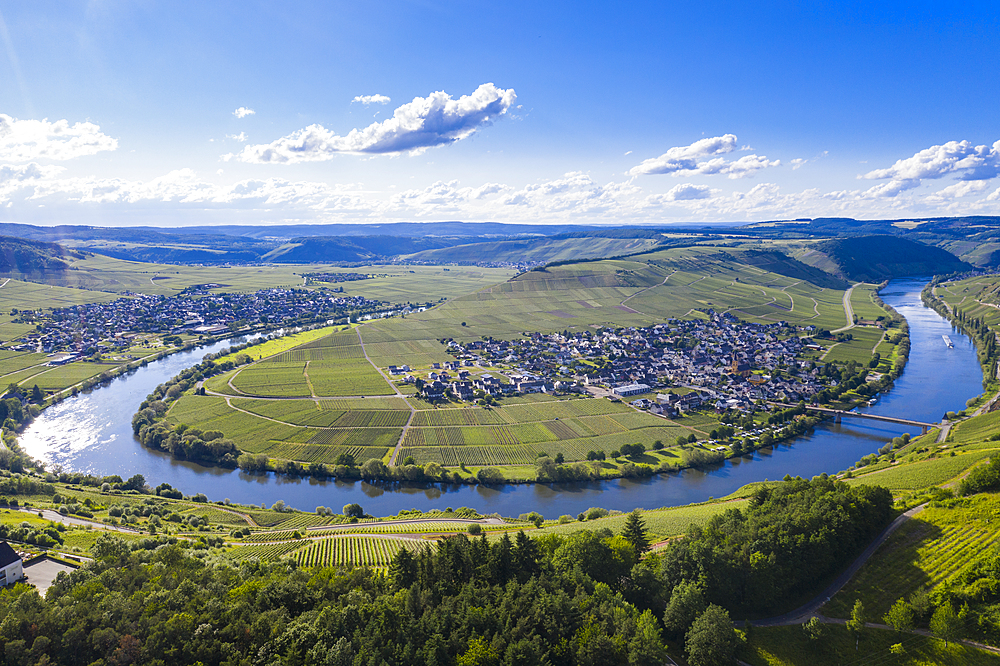 The Moselle at Trittenheim, Moselle Valley, Rhineland-Palatinate, Germany, Europe