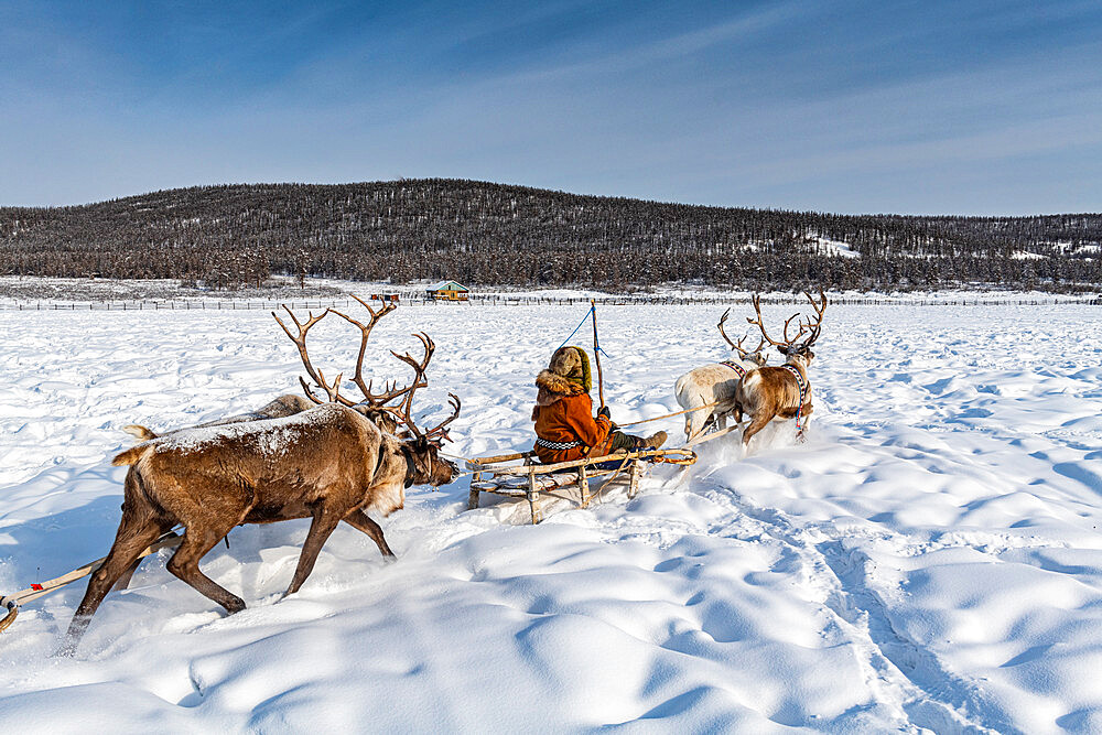 Friendly Evenc family on sledges pulled from reindeers, Oymyakon, Yakutia, Sakha republic, Russia - 1184-3816