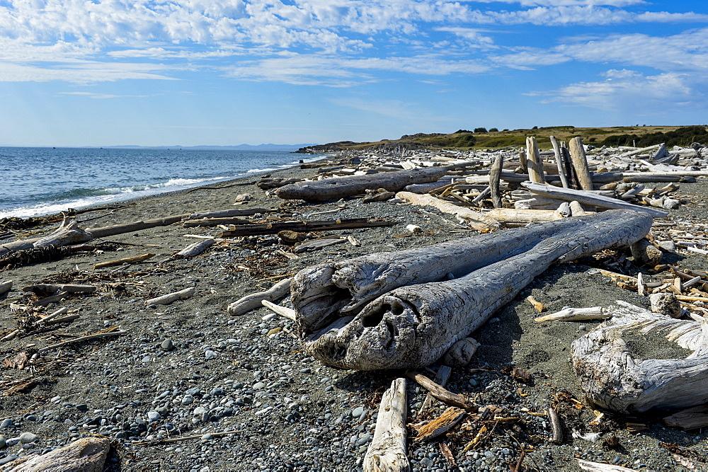 Huge logs on a beach on San Juan island, San Juan islands archipelago, Washington State, United States of America, North America