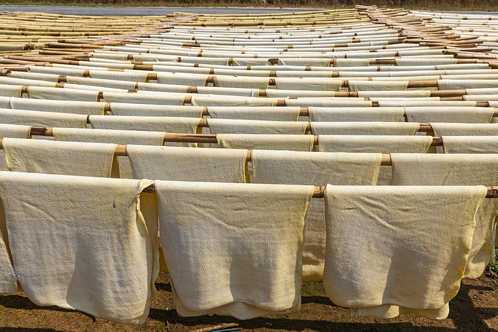 Fresh made rubber sheets at a Rubber plantation near Myeik (Mergui), Myanmar (Burma), Asia
