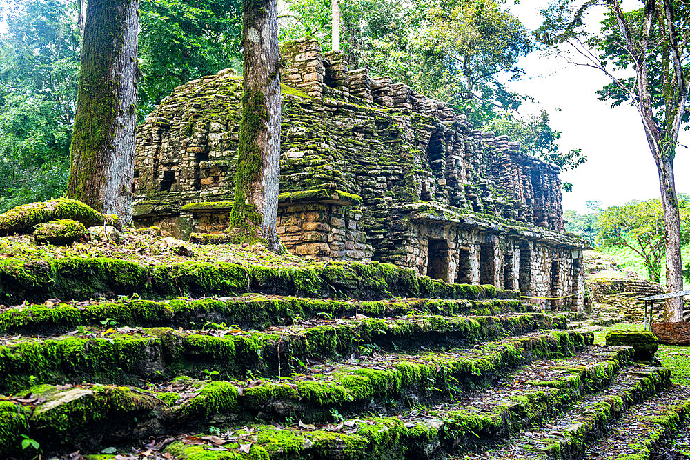 Archaeological Maya site of Yaxchilan in the jungle of Chiapas, Mexico, North America - 1184-5569
