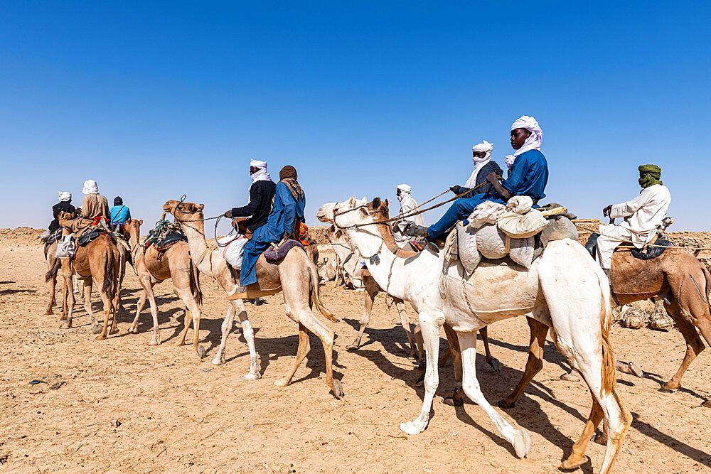 Tuaregs on their camels, Bilma, Tenere desert, Niger, West Africa, Africa - 1184-5594