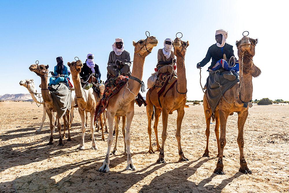 Tuaregs on their camels, Bilma, Tenere desert, Niger, West Africa, Africa - 1184-5595