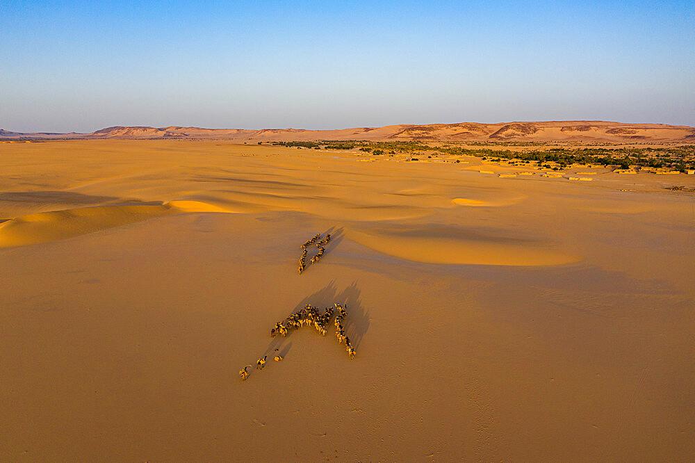 Oasis Fachi, Tenere desert, Niger, West Africa, Africa - 1184-5602