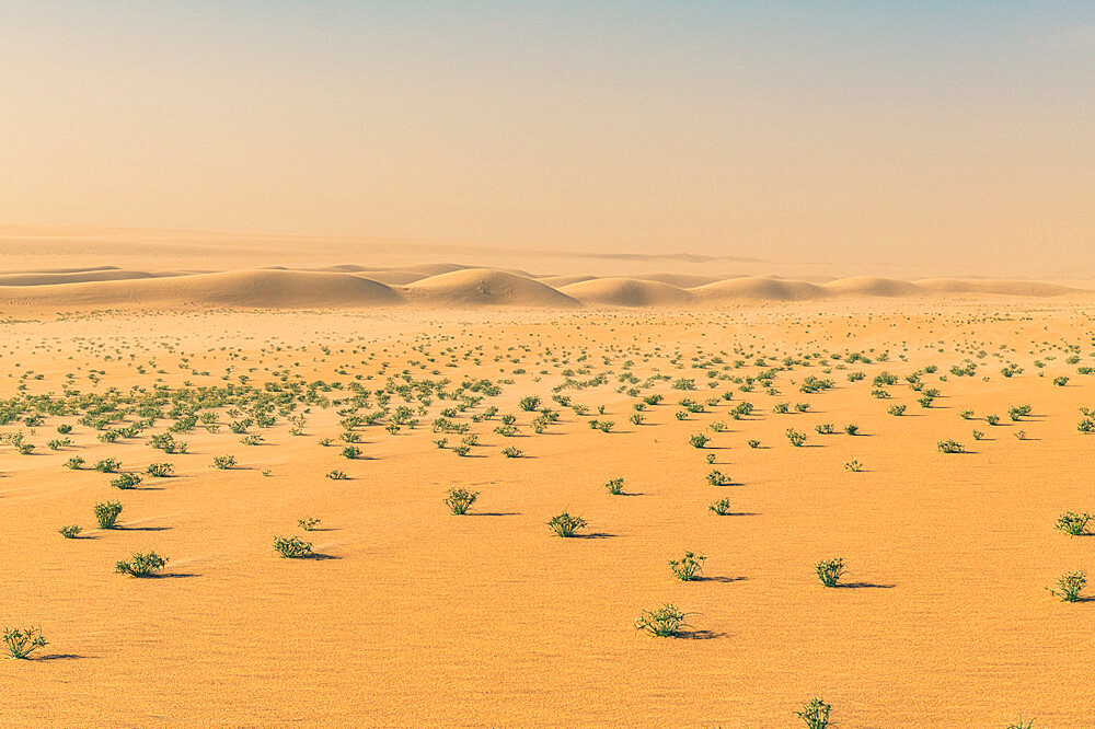 Green bushes in the Tenere desert, Niger, West Africa, Africa - 1184-5610