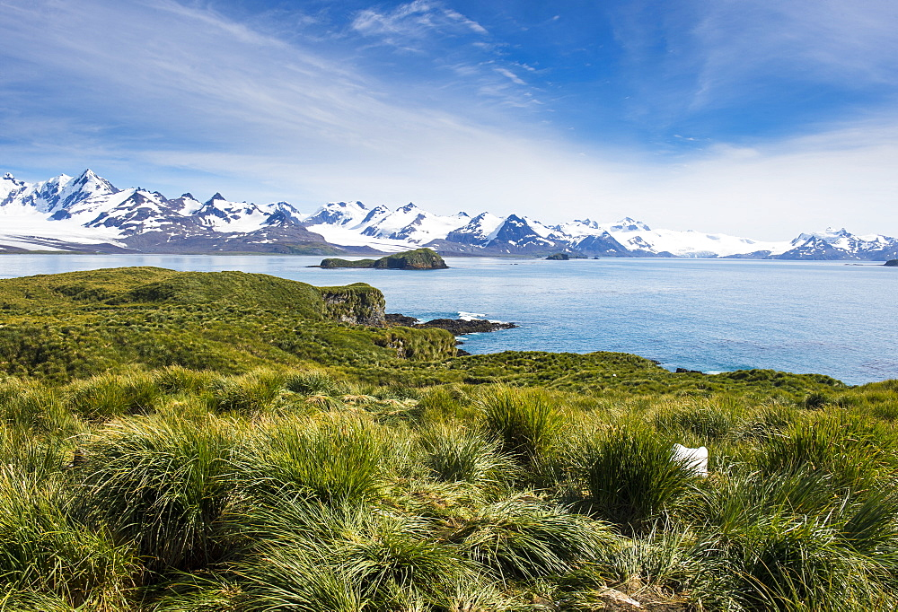 View over Prion Island, South Georgia, Antarctica, Polar Regions