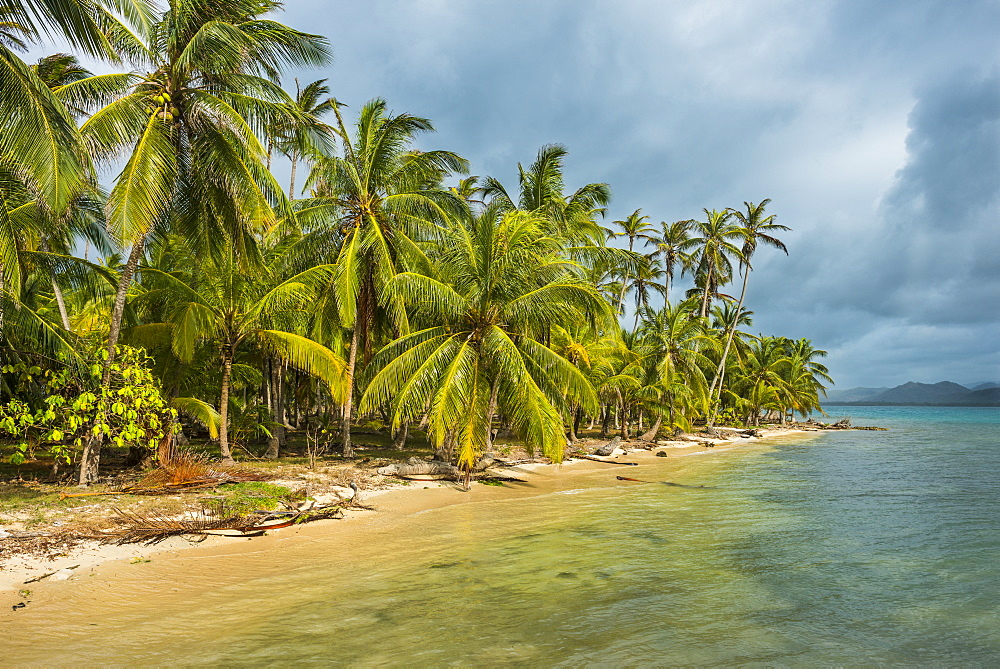 Beautiful palm fringed beach, Achutupu, San Blas Islands, Kuna Yala, Panama, Central America