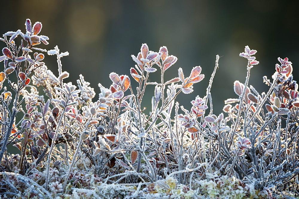 Frost, Sweden, Scandinavia, Europe