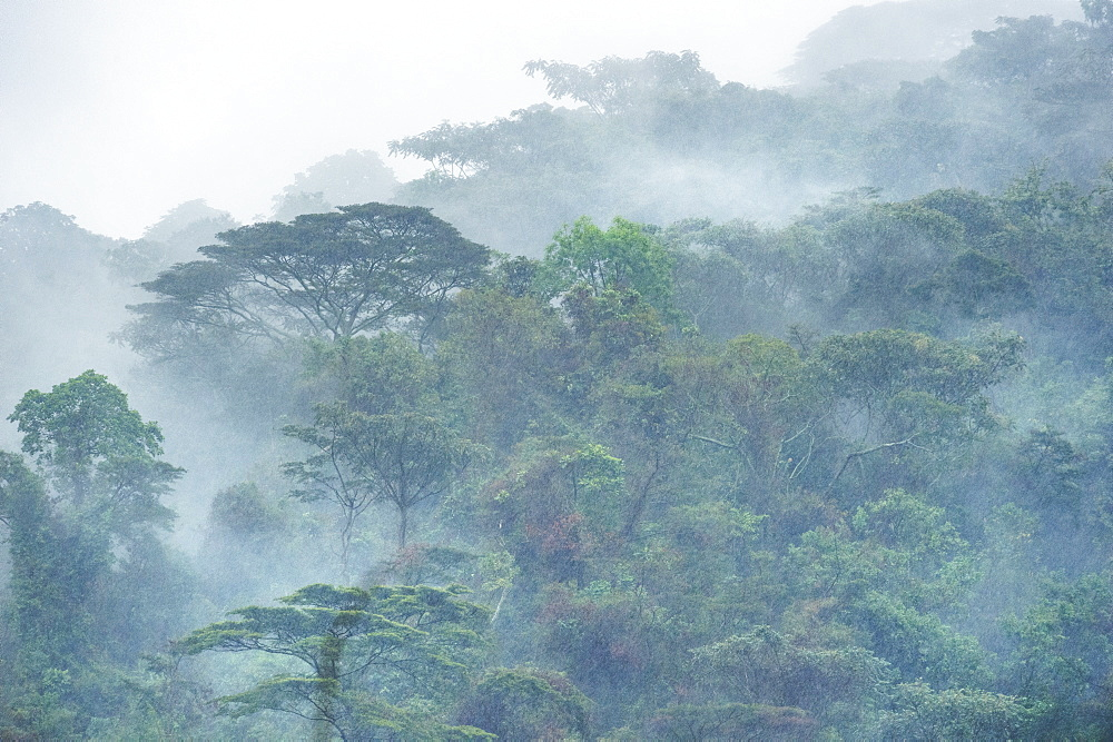 Bwindi Impenetrable Forest, UNESCO World Heritage Site, Uganda, Africa