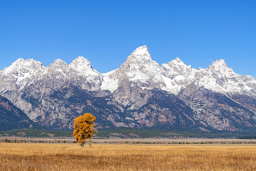 Mormon Row and Teton Range, Grand Teton National Park, Wyoming, United States of America, North America