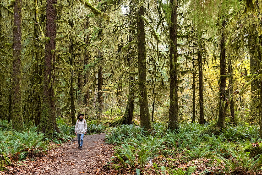 Hall of Mosses rainforest, Olympic National Park, UNESCO World Heritage Site, Washington State, United States of America, North America