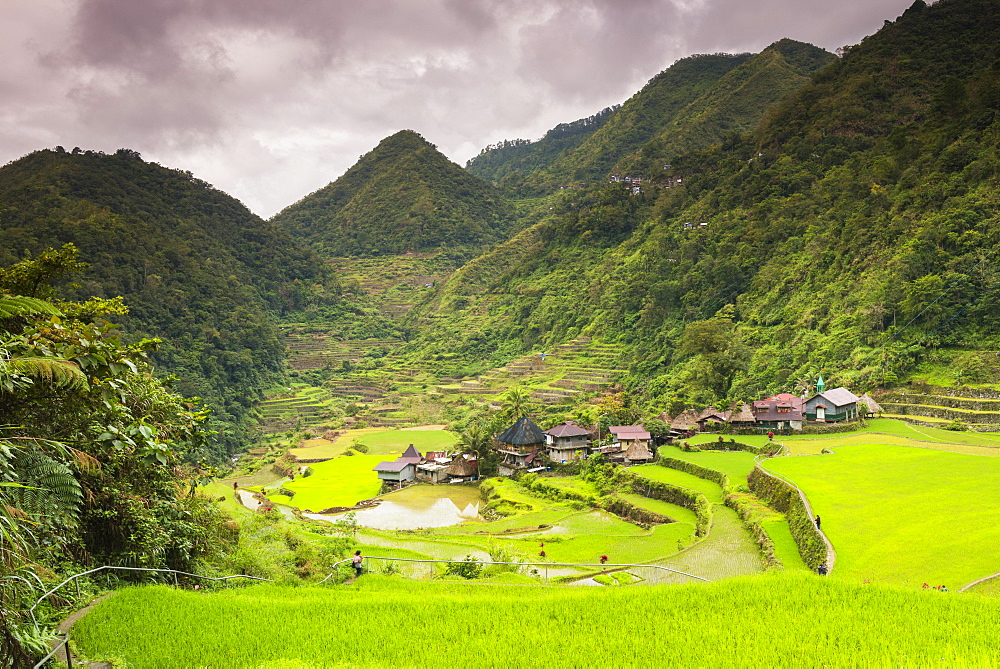 Rice Terraces, Bangaan, UNESCO World Heritage Site, Luzon, Philippines, Southeast Asia, Asia