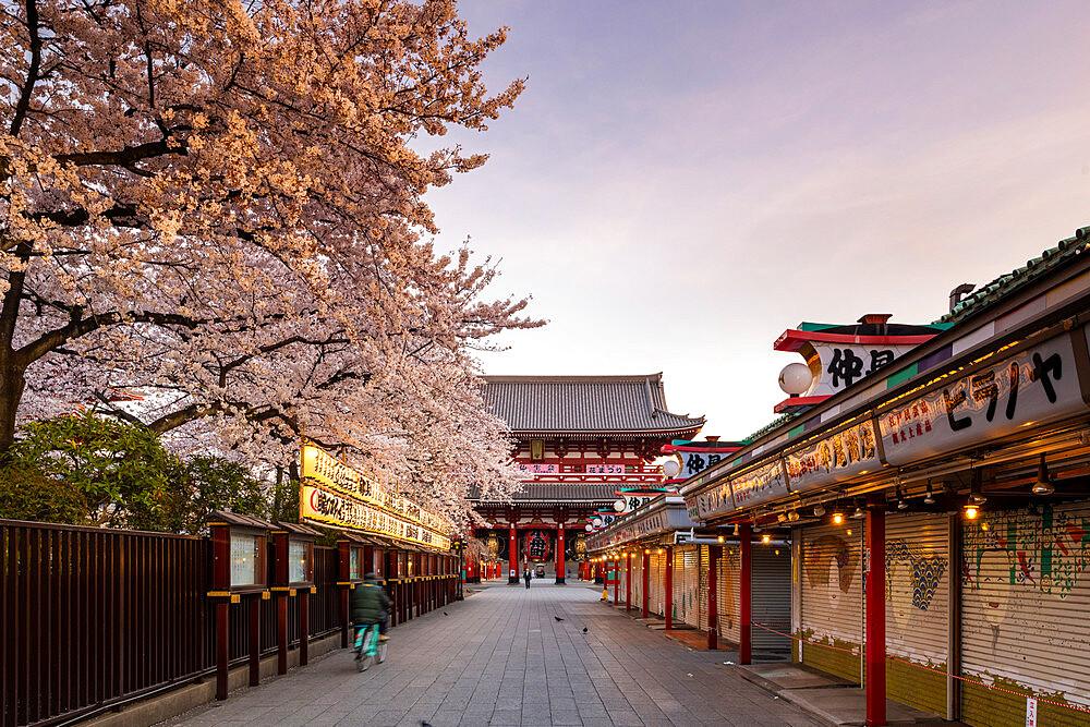 Sensoji Temple in Cherry blossom season - 1186-771