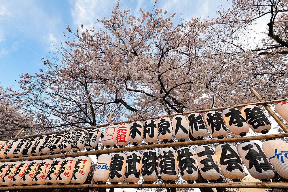 Sensoji Temple in Cherry blossom season - 1186-778