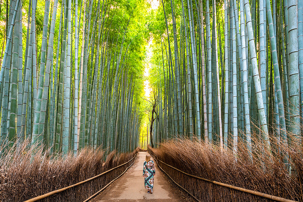 Arashiyama Bamboo Grove Kyoto, Japan, Asia - 1186-802