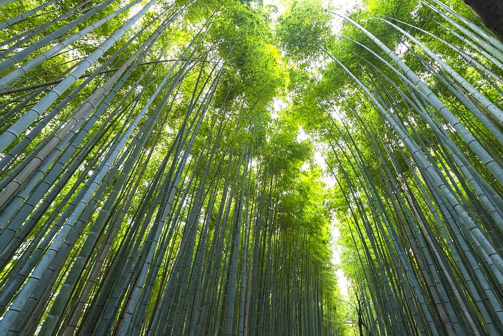 Arashiyama Bamboo Grove Kyoto, Japan, Asia - 1186-803