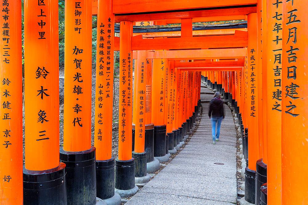 Fushimi Inari Taisha shrine and torii gates - 1186-815