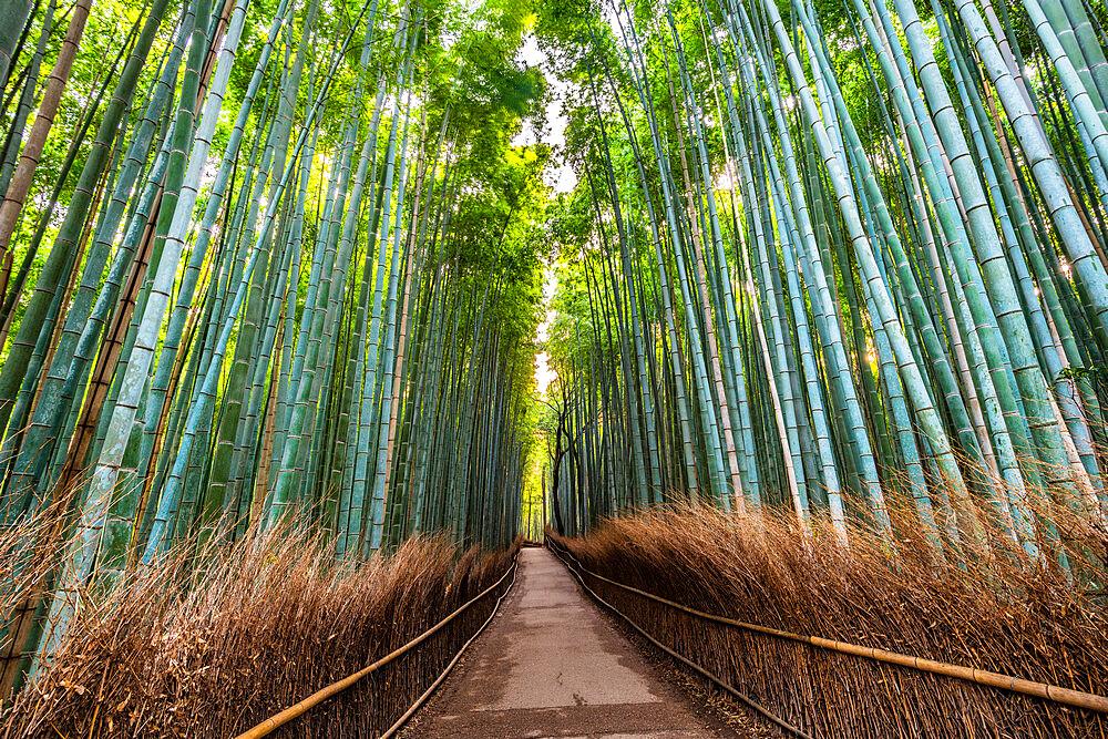 Arashiyama Bamboo Grove Kyoto, Japan, Asia - 1186-823
