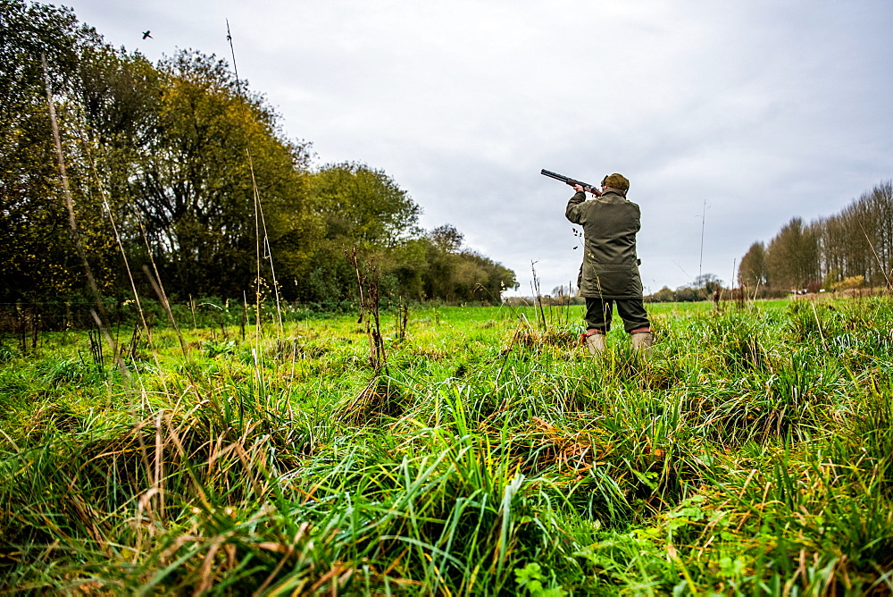 Gun shooting at bird on Driven pheasant shoot, Wiltshire, England, United Kingdom, Europe