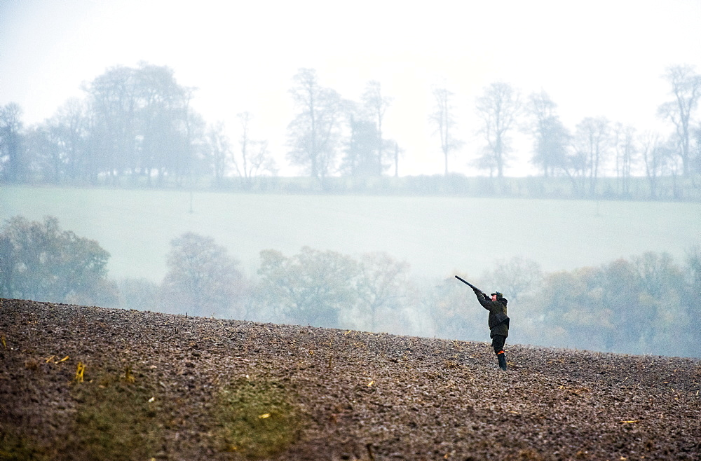Gun shooting on a pheasant shoot in Wiltshire, England, United Kingdom, Europe