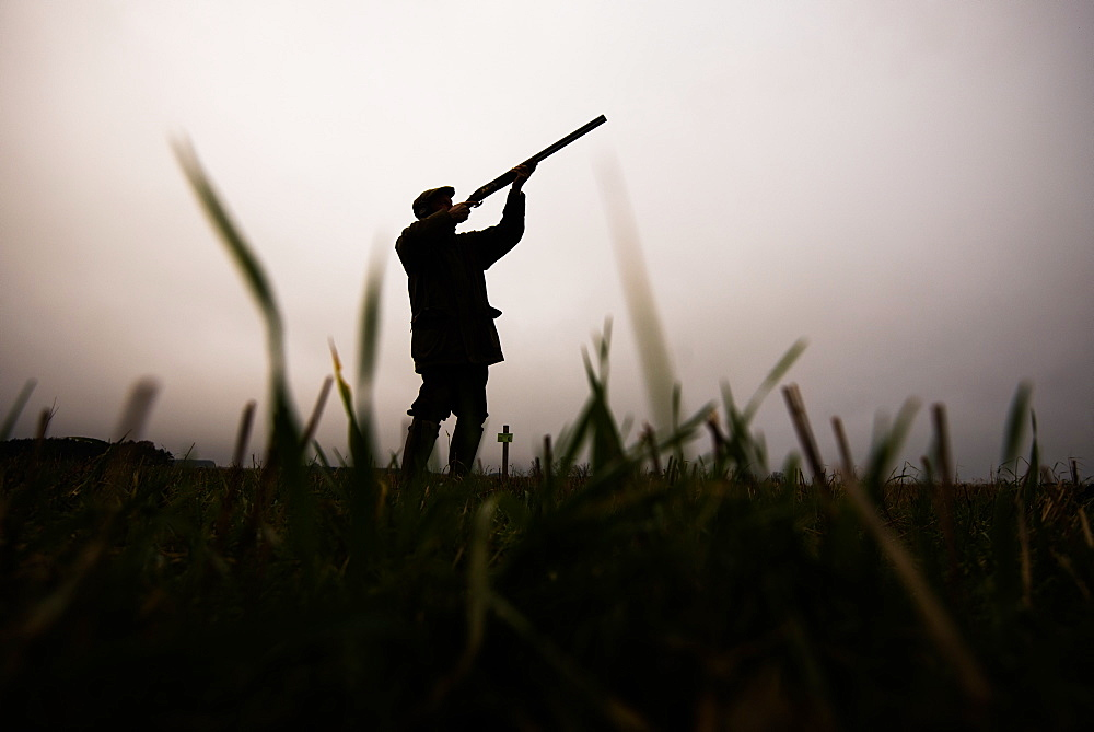 Silhouette of gun shooting on a pheasant shoot, United Kingdom, Europe