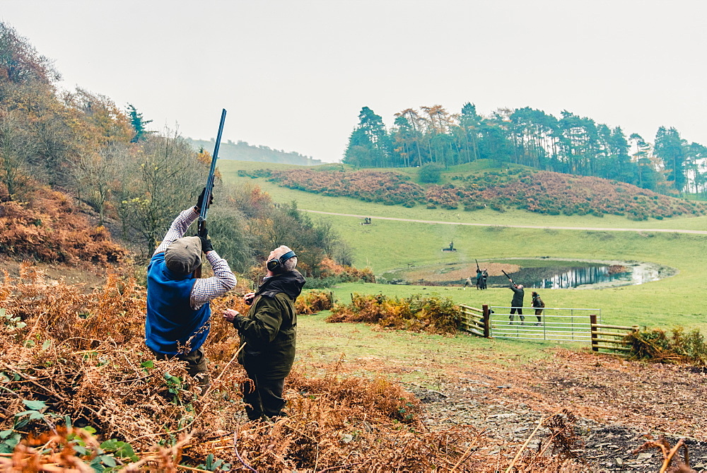 Gun on a hillside shooting at pheasants flying overhead, United Kingdom, Europe - 1199-568