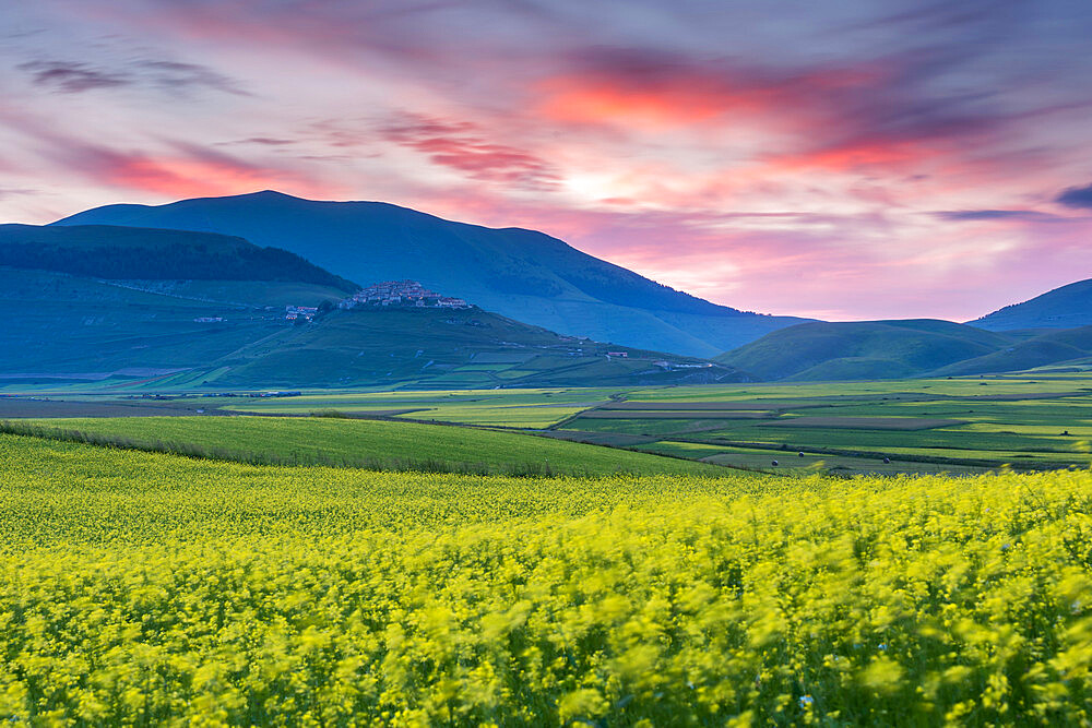Flowering lentils on the Piano Grande, looking towards Castelluccio di Norcia, sunset, Monte Sibillini, Umbria, Italy.
