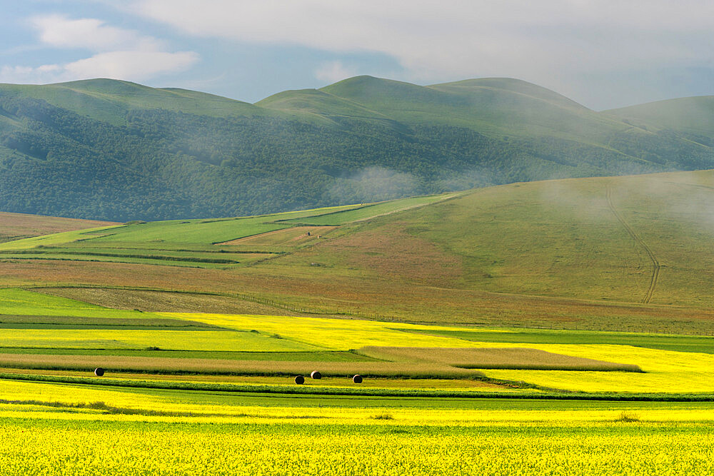 Fields of flowering lentils on the Piano Grande, Monti Sibillini National Park, Perigua District, Umbria, Italy, Europe - 1200-123