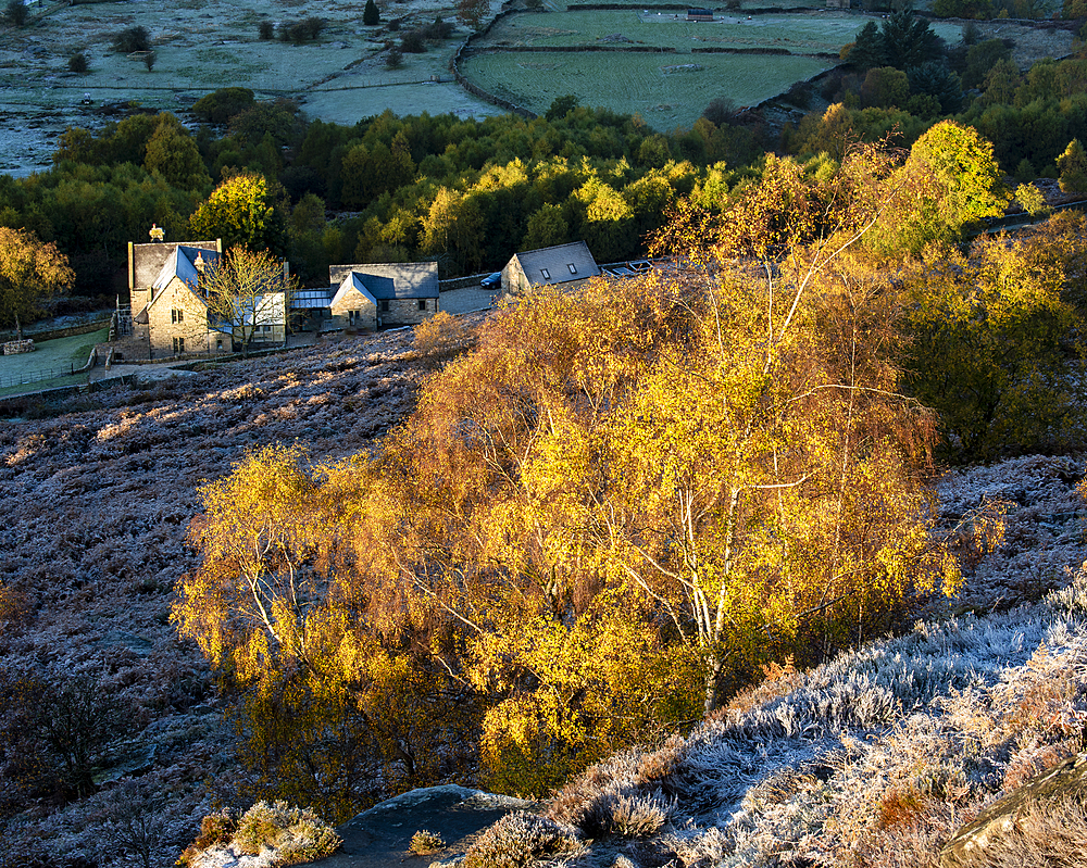 Farm house and silver birch tree on a frosty morning in autumn, Peak District National Park, Derbyshire, England, United Kingdom, Europe